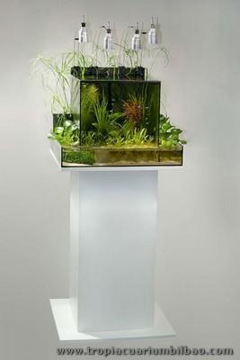 Acuario plantorarium 80 litros con mesa theiling for Disenos de acuarios